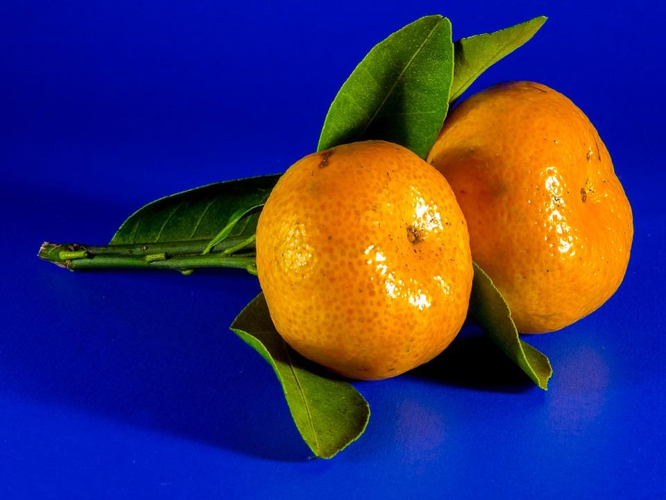 Recolección y venta de Mandarinas